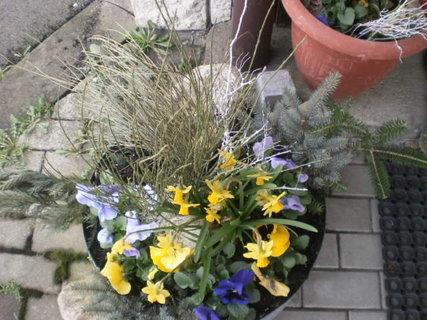 FOTKA - Jarní květináč