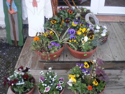FOTKA - Jarní květináče