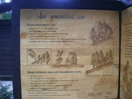 FOTKA - KRNAP  - lesy