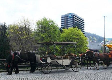 FOTKA - kon� s vozy