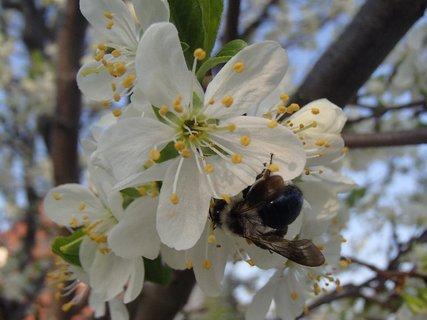 FOTKA - podlieza pod kvet