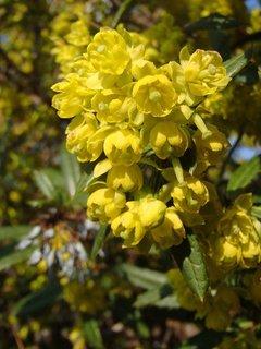 FOTKA - jar v žltom šate