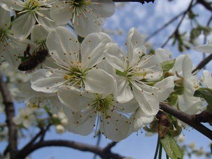 FOTKA - všetko krásne kvitne