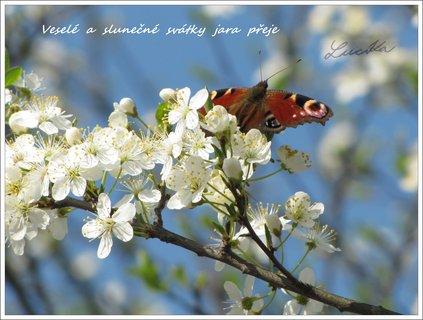 FOTKA - Slunečné svátky jara...