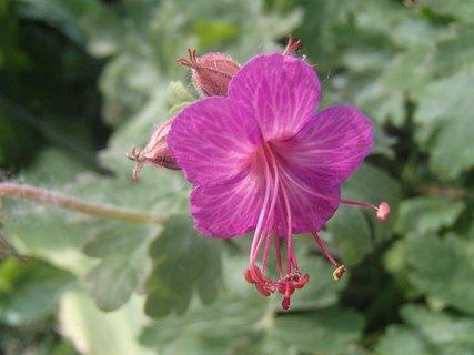 FOTKA - dnes prvé kvety