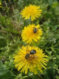 FOTKA - usilovnosť včielok