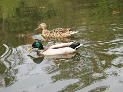 FOTKA - Průhonický park  -  milý doplněk  rybníčku