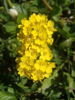 FOTKA - drobné žlté kvietky