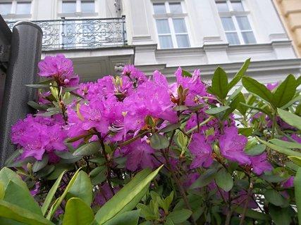 FOTKA - Kvetl v Karlátkách