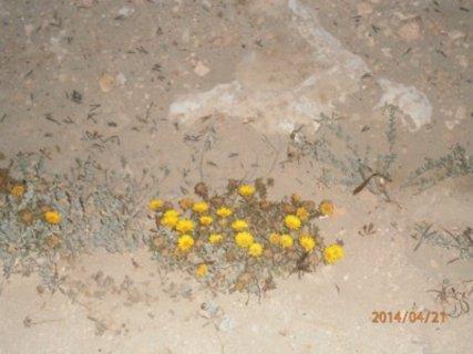 FOTKA - Skromne kvitky primo na plazi