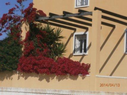 FOTKA - Bouganvilei u domku