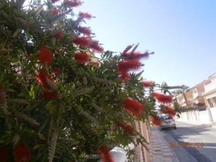 FOTKA - Krasne kvetou v parcich i u domu