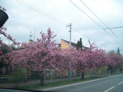 FOTKA - rozkvetlá Plzeň