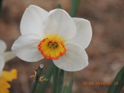 FOTKA - Narcis s krátkou sukýnkou 20.4. 2014