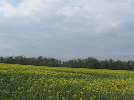 FOTKA - Už je žluto