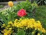 Jarní květová společnost