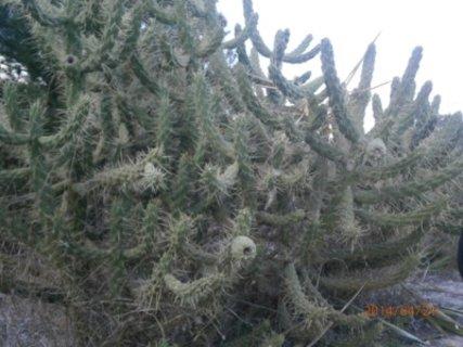 FOTKA - Kaktusum to sucho nevadi