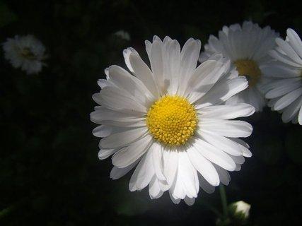 FOTKA - biela ako sneh