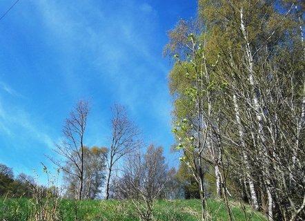 FOTKA - Předjaří u lesa