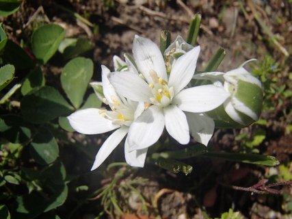 FOTKA - kvitnú v parku