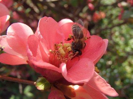 FOTKA - včielka sa hostí