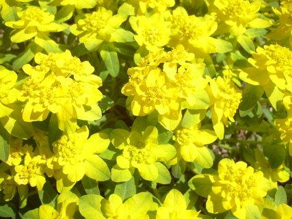 FOTKA - zářivá žlutá
