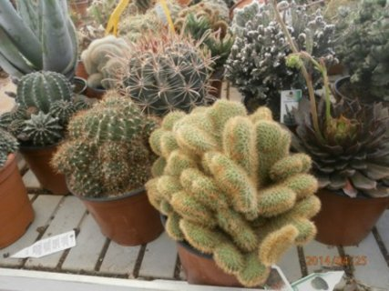 FOTKA - nejlepe se dari kaktusum