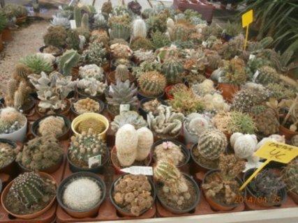 FOTKA - kaktusum na jihu svedci
