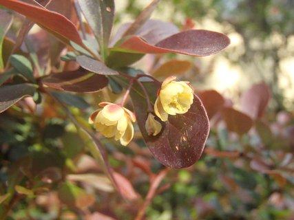FOTKA - krík kvitne