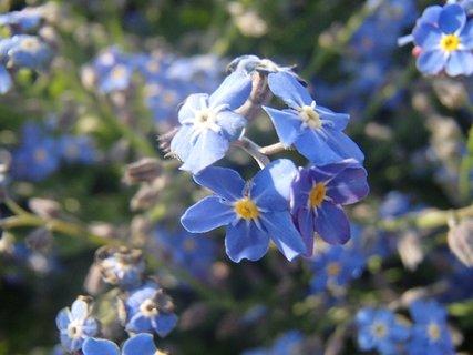 FOTKA - modr� nez�budky