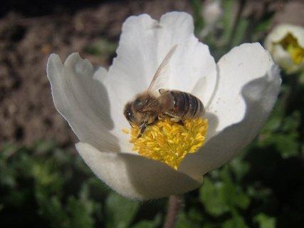 FOTKA - v kalichu kvetu