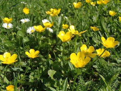 FOTKA - jar  v tráve