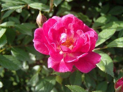 FOTKA - už začíname kvitnúť