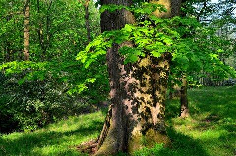 FOTKA - Krajka na stromě