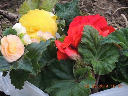 FOTKA - Koupeno na trhu 3.5. 2014