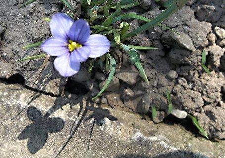 FOTKA - Květ a stín