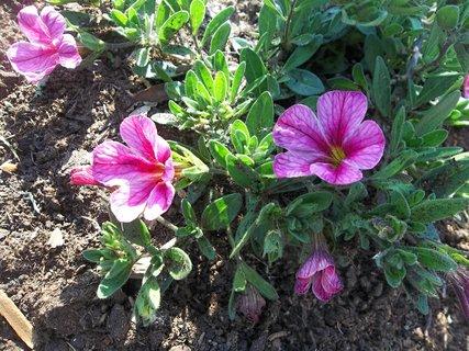 FOTKA - Květinky z Velehradu