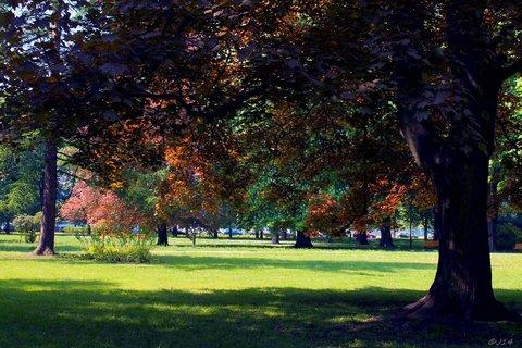 FOTKA - v městském parku