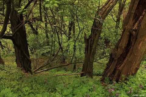 FOTKA - lesním tichem
