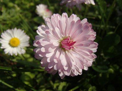 FOTKA - s ružovým nádychom