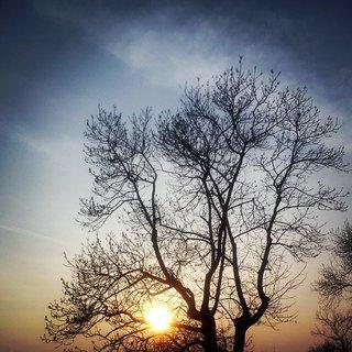 FOTKA - Slunce zapadá za stromy