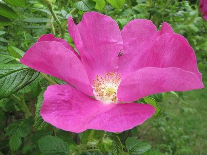 FOTKA - mala muska nebo velky kvet?