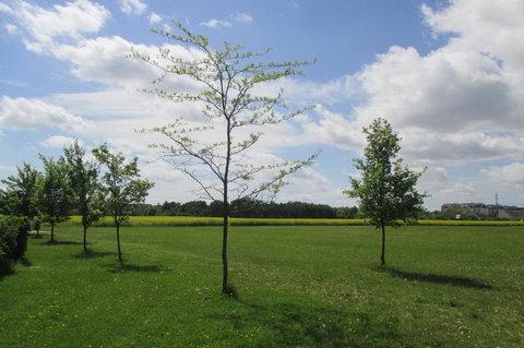 FOTKA - Louka mezi sportovními areály - plná stromků