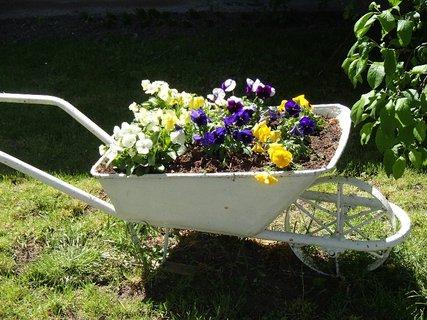 FOTKA - v jednej záhrade