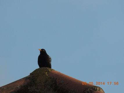 FOTKA - Kosák na střeše 8.5. 2014