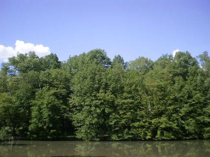 FOTKA - Rybník a stromy