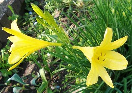 FOTKA - Žluté kvetou