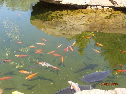 FOTKA - Rybičky v jezírku