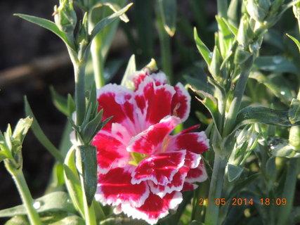 FOTKA - Červeno-bílý 21.5.2014