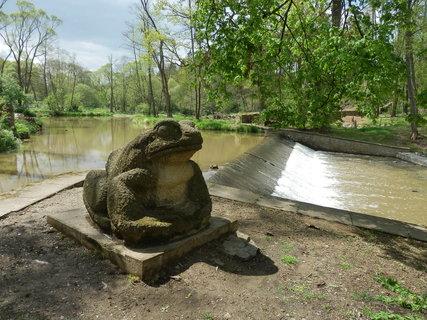 FOTKA - Žába ve vlašimském zámeckém parku Autor: Daniel Talavera